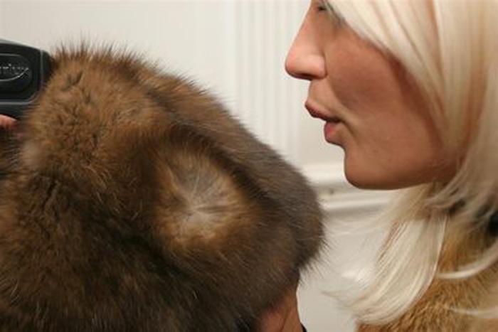товары почему у норковой шубы есть белые волоски прошествии